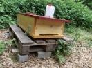 Unsere Bienen sind da